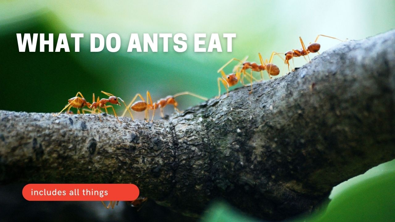 What Do Ants Eat