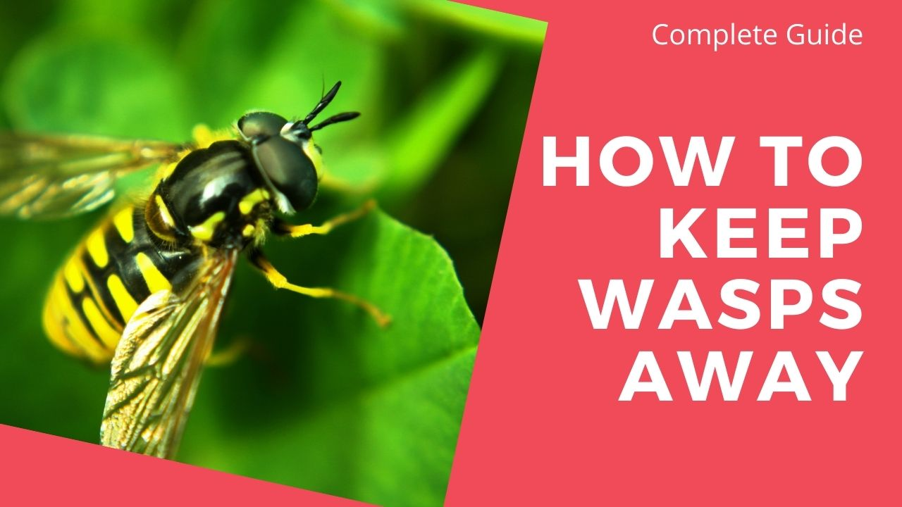 How to Keep Wasps Away: A Complete Guide