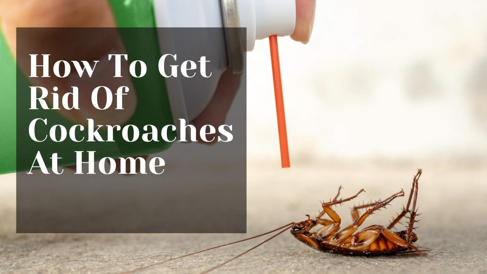 How To Get Rid Of Cockroaches At Home