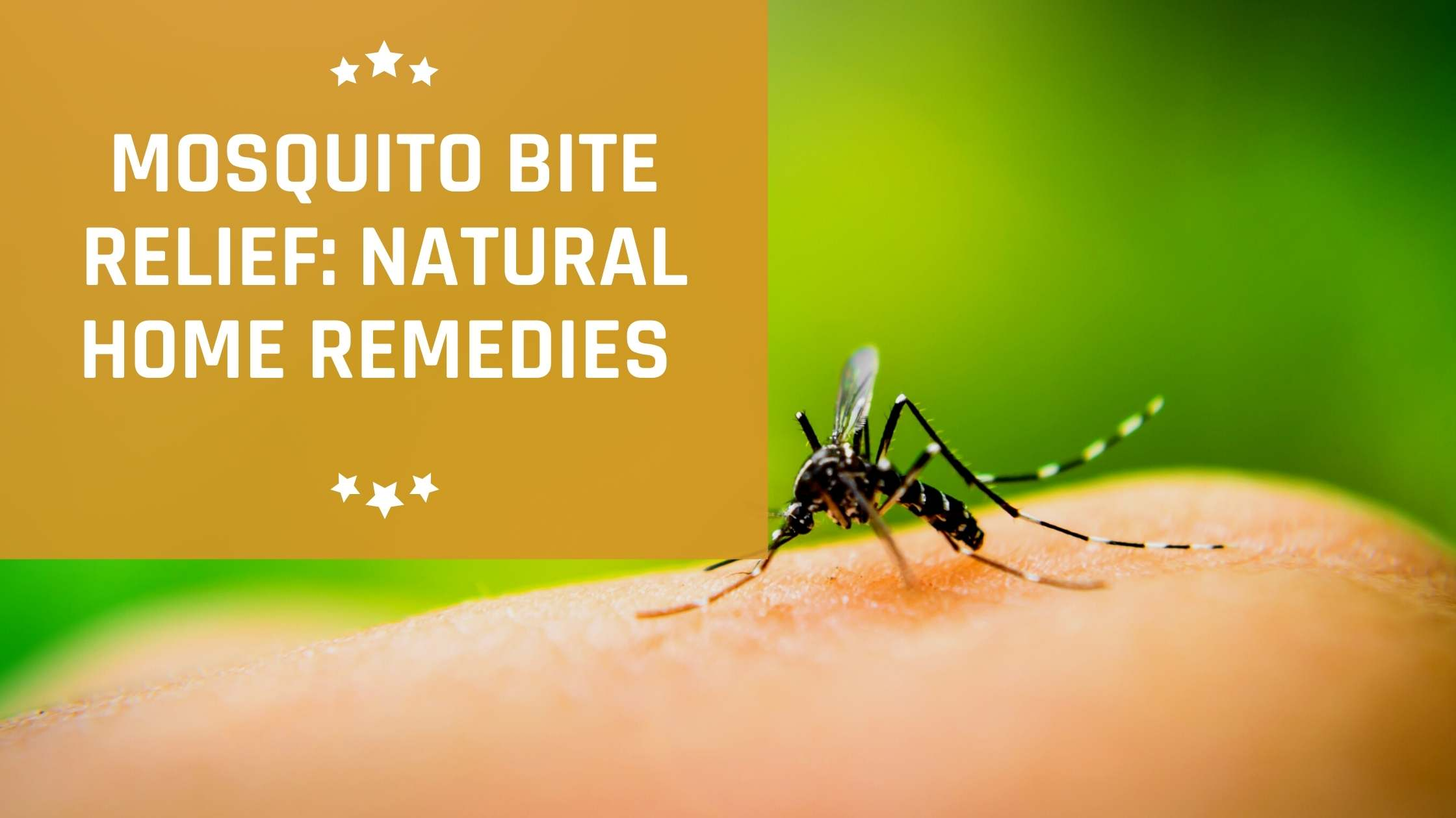 Mosquito Bite Relief: Natural Home Remedies That Work Like A Charm