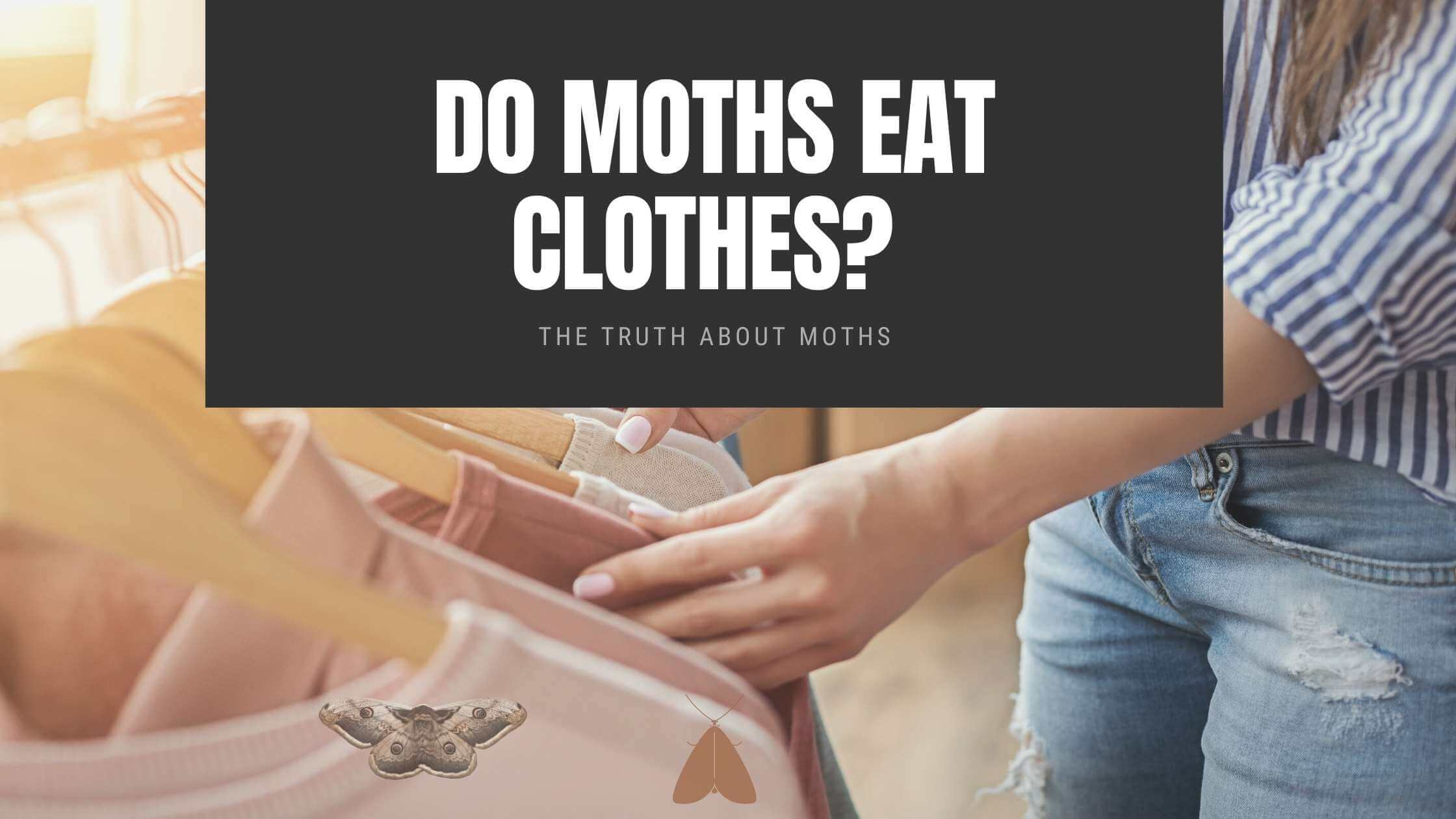 The Truth About Moths